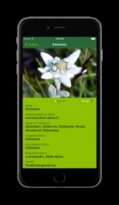 AlpenblumenFinder_det_Edelweiss